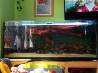 560 liters tank stand full set up everything included