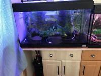 3 fish tanks