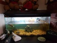 3 terrapins and 1 musk for sale with full set up