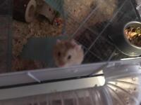 Hamster with cage and everything needed