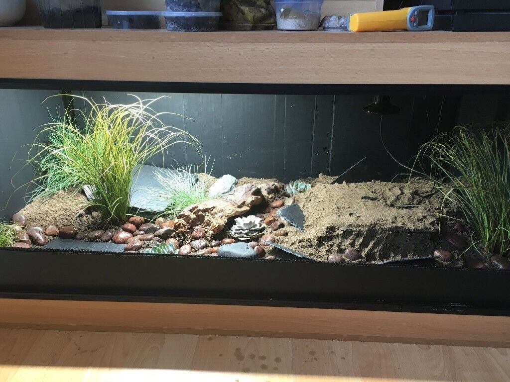 Fully Bioactive Leopard Gecko Enclosure In Huddersfield