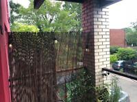 Black fern screen