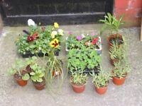 job lot of plants, (SET A )
