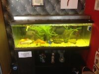 Large tank and fish ect