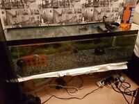 Fish tank to swap or sell