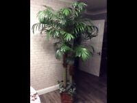 Palm tree artificial 2m high