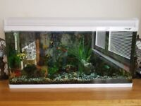BOYU Aquarium 125LTR complete with fish, and many accessories, filters & heater etc
