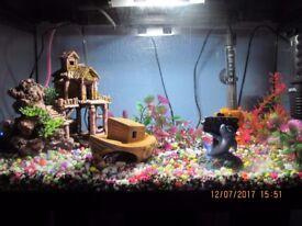 Aquael Classic 40 Black Aquarium & Cupboard