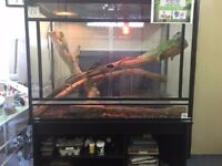 Chinese Water Dragons And Tank