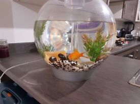 Lovely goldfish ready for a new home!!!
