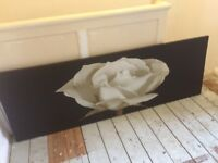 Very large white rose on black background canvas ideal large wall lovely pic bargain price
