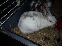 Fluffy baby rabbits