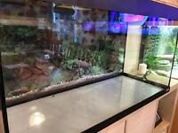 Fluval 200 litre Fish Tank