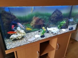 Fish tank jewel 240
