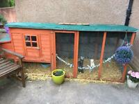 ferret enclosure and ferrets