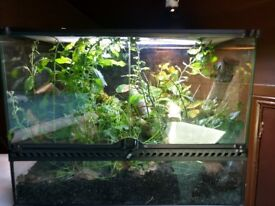 Bamboo rat snake with Vivarium