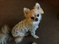 Chihuahua Dog Puppy Aran Hand Knitted Jumper Dog Coat all colours made to measure from 9 pounds