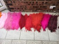 XL Ostrich Feathers bundle