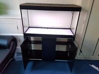 FISH TANK FLUVAL ROMA 200 WITH BLACK CABINET