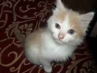 Kittens Looking For Homes