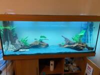 Juwel Rio 450 litre 5ft aquarium