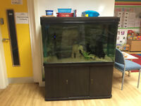4FT All Pond Solutions Aquarium compkete setup with 2 breeding pairs of Angelfish