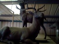 2 lifesized garden animal statues 1stag and i doe