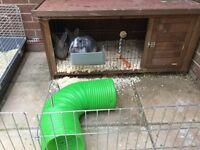 Outdoor wooden rabbit hutch