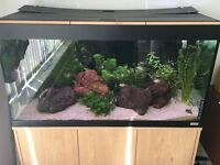 Fluval Roma 200l fish tank full set up