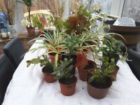 Various house plants for sale.