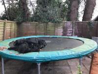 12' trampoline