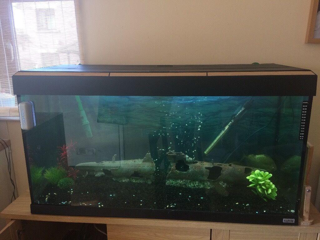 Fish aquarium kidderminster - Fish Tank