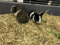 Adorable pair of rabbits