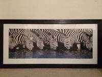 Zebra framed picture