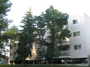 1 Bedroom Suite Now Avail. - Off Whyte Ave, Close to U of A