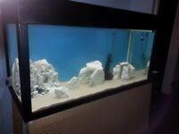 Large homemade 4ft fish tank