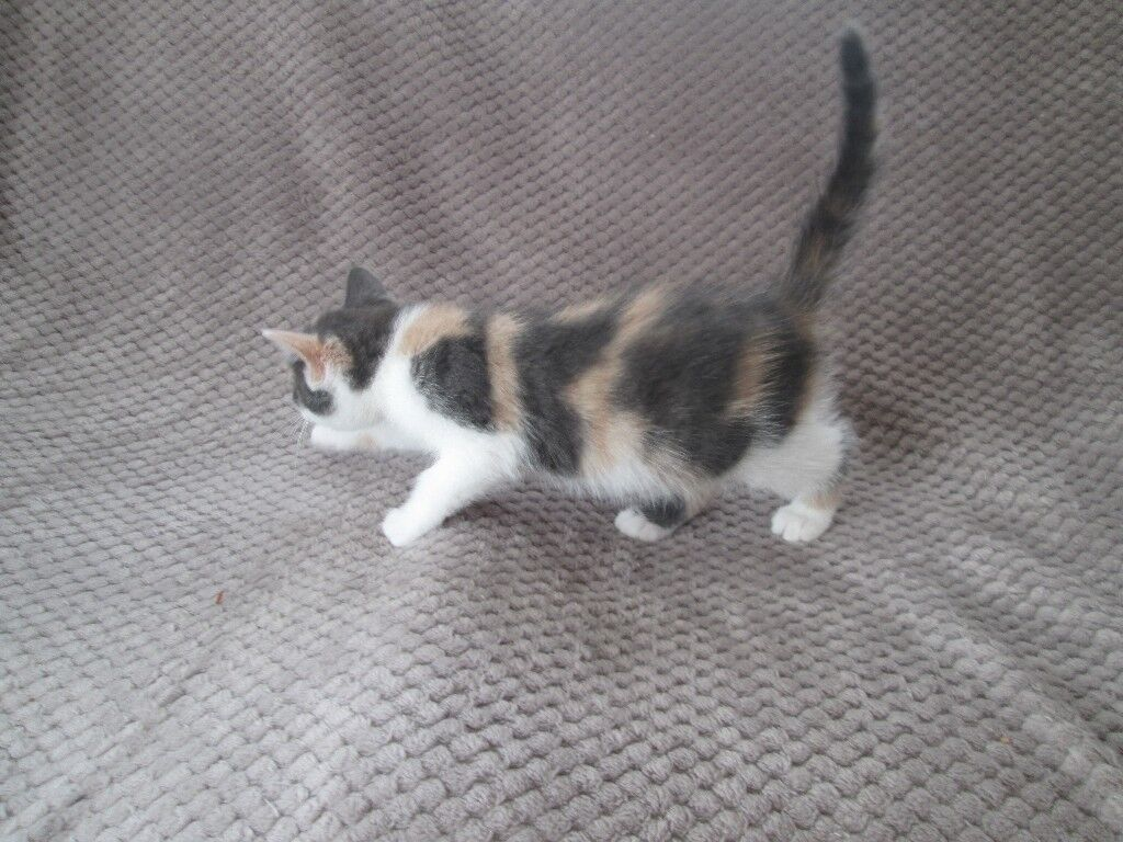 4 GORGEOUS FLUFFY KITTENS | in Liverpool, Merseyside | Gumtree