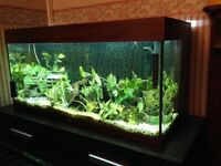 Juwel 180 litre fish tank. Comes with everything seen in the tank