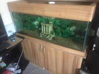 4x2x2 fish tank and stand