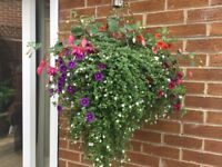 Hanging Baskets With Solar Light (3 Available)
