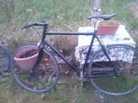 genesis single speed bike