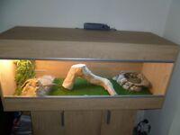 4ft vivarium ( Reptile Tank )