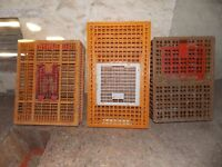 Pheasant / poultry crates