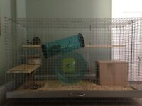 Two degus for sale with cage and accessories