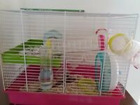 3 month old Syrian Hamster with Cage