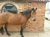 Registered new forest for sale