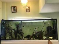 Fish Tank and filtration system.... sold as seen