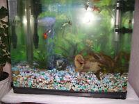 aquarium, full setup