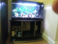 "juwel fishtank/aquarium 32"""