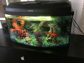 Fish tank for sale with accessories and golden fishes